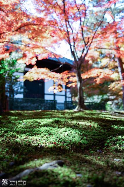 十年,京都四季 | 卷五 | 京都與我,有時還有關西 | 11