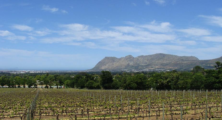 Wijn proeven in Kaapstad? Bezoek Groot Constantia | Mooistestedentrips.nl
