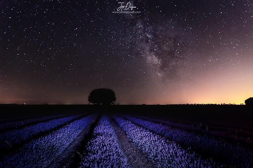 The Milk Way