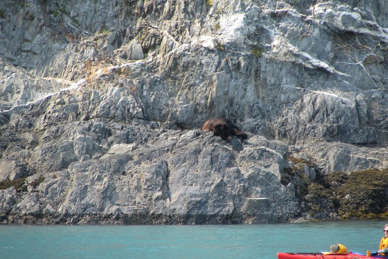 This was the only grizzly we got to see for the duration of our Alaska trip