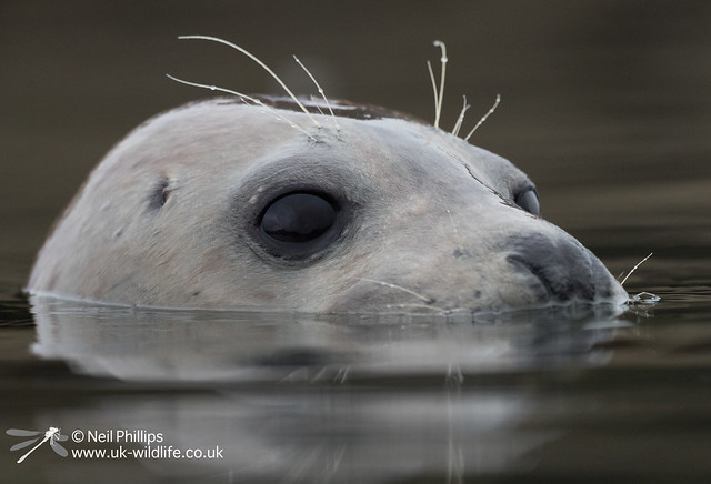 Seal-15