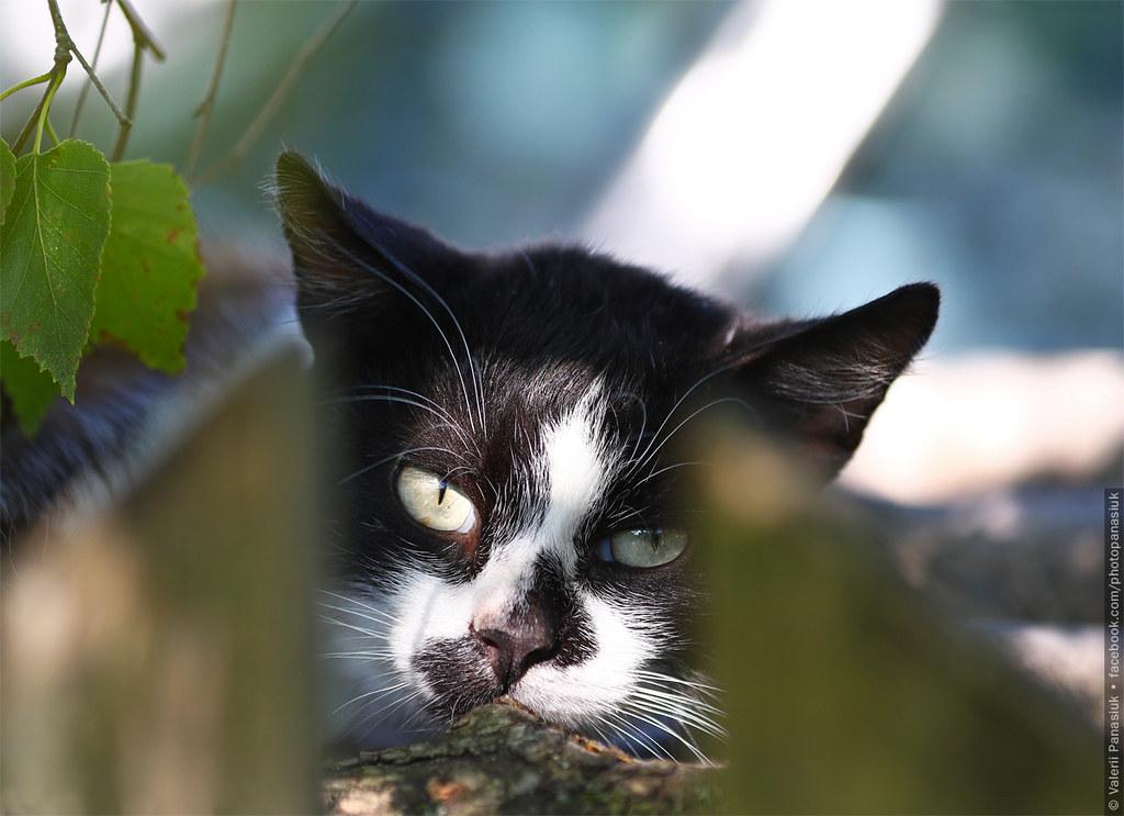 20170809_komarovo_cat_001