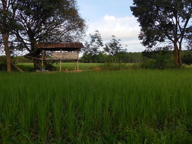 Farm shed 2, Nikon COOLPIX S5200