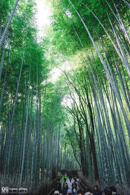 十年,京都四季 | 卷五 | 京都與我,有時還有關西 | 05