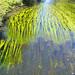 Flusskraut by PauPePro