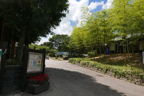 shosukechaya006