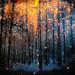 Winter Rain of Light (night version)