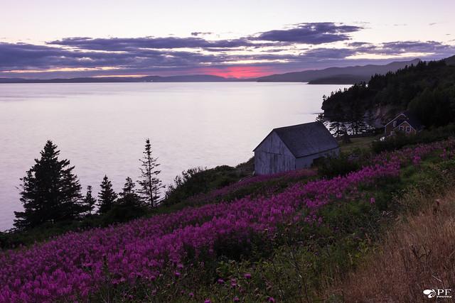 ''La vie en rose, Nikon D7200, Sigma 10-20mm F3.5 EX DC HSM
