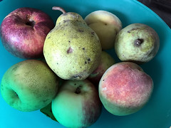 fruit bowl IMG_0203