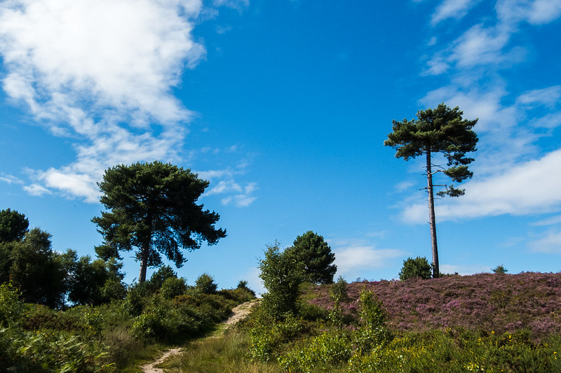 Trees, clouds and heather
