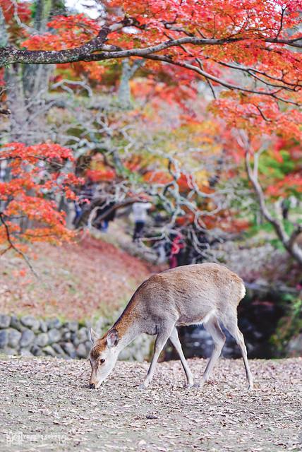 十年,京都四季 | 卷五 | 京都與我,有時還有關西 | 28
