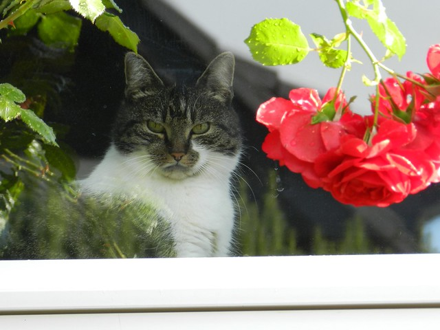 Sina sieht Hesi im Garten