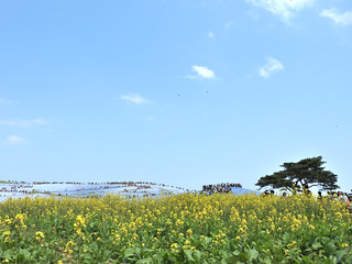 ひたち海浜公園 みはらしの丘 05