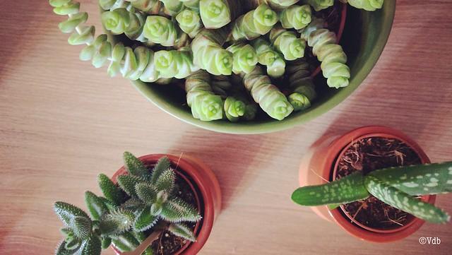 kamerplanten bij Dille & Kamille