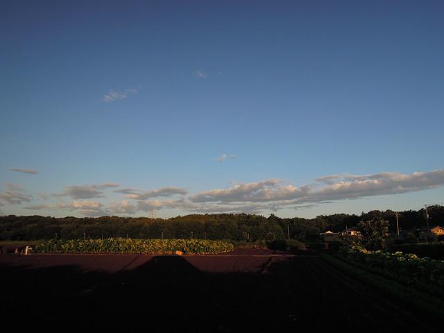 朝 所沢市 田舎風景