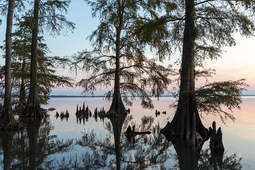 photosbymch landscape sunset lake trees silhouette reflection lakephelps pettigrewstatepark northcarolina usa 2017 canon 5dmkiv outdoors