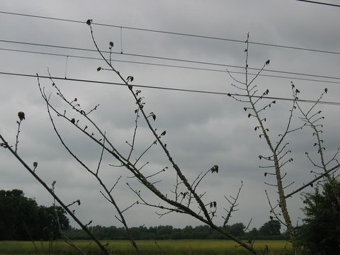 05 branches