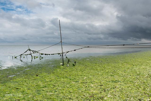 Lijnset visfuiken in waddenzee Texel