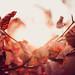 Autumn Mood by thethomsn