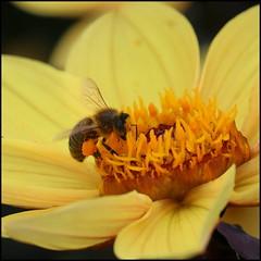 Pollen a-plenty