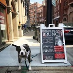 Bottomless mimosas and bloody mary's, sweet potato donut and a churro donut, chicken and waffles and heuvos rancheros.. need I say more? Oh and you might see cute pups on our patio. @johnnyclamcakes - - - - #foodie #yum #rhody #farmtotable #rifoodfights #