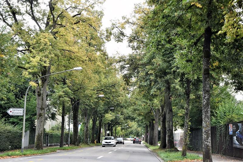 Road to Langendorf 06.09 (8)