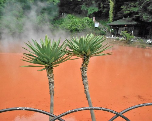 jp-beppu-enfers-Blood Pond Hell (2)