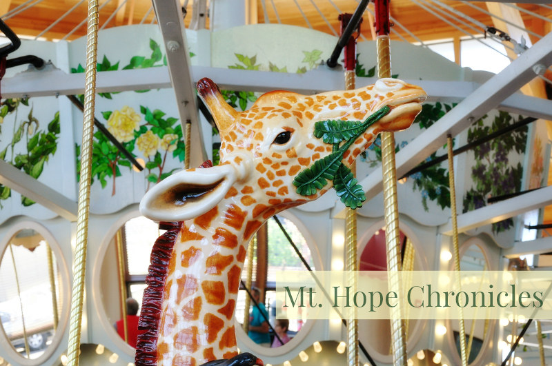 Albany Carousel @ Mt. Hope Chronicles
