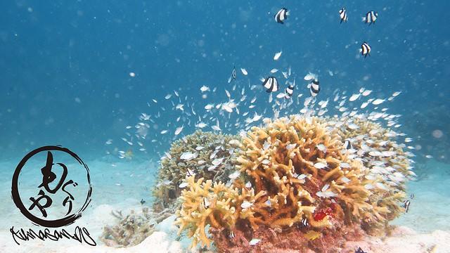 サンゴに熱帯魚たちがいるだけで癒やされますね♪