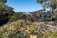 Spring Flowers Kings Park Perth