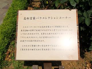 谷津バラ園 08