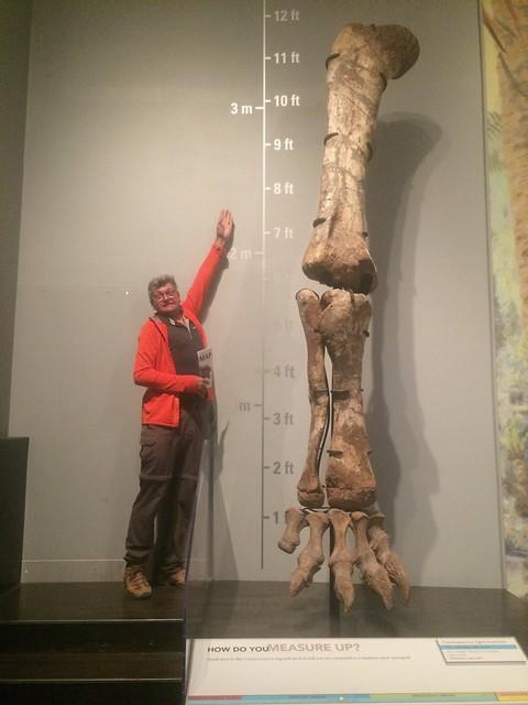 Drumheller Tyrell Pierre bone