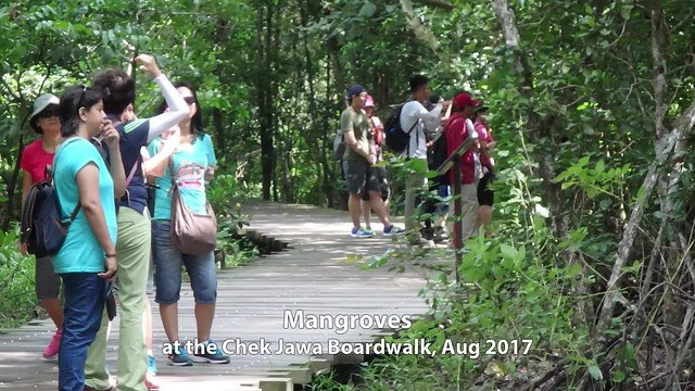 Exploring mangroves on the Chek Jawa boardwalk