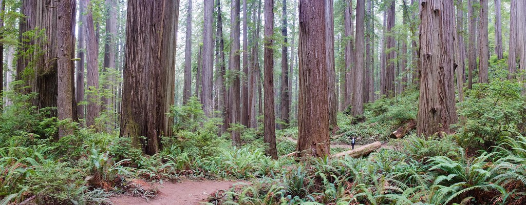 Jedediah Smith Redwoods State Park, California