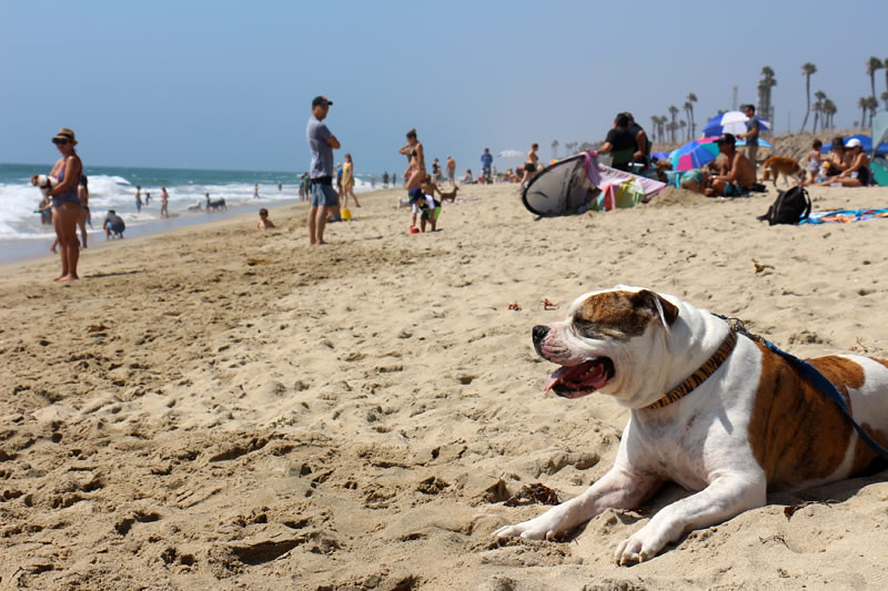 生活,遊記,一日遊,海灘,沙灘,狗狗友善,美國,加州,Huntington Beach