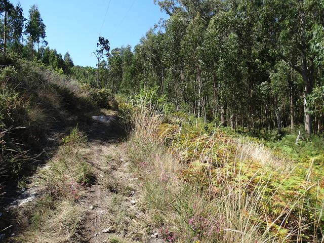 Camino en la Ruta do Monte Tahume
