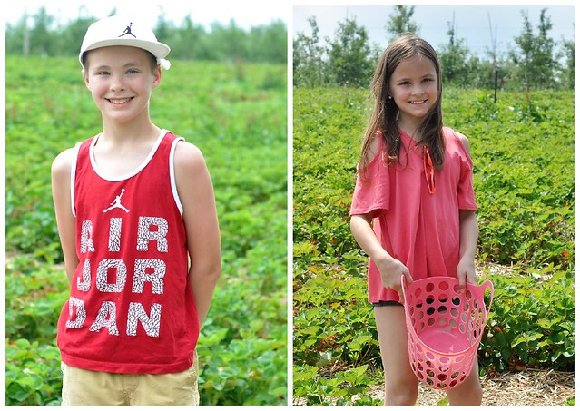 Strawberry Picking Summer Tradition
