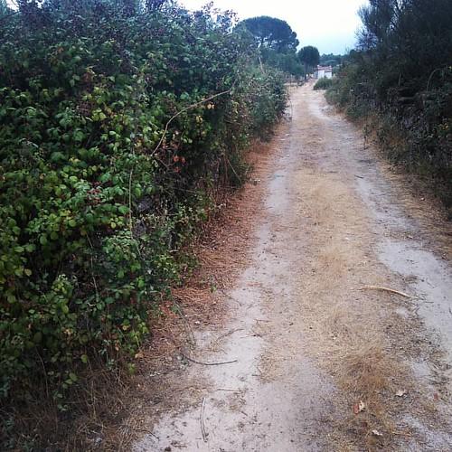 #caminhada #amoras #silvestres   Hoje não me largam; ou eu é que não as largo...