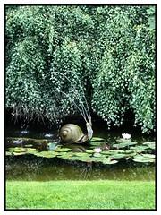 Spouting Snail Pond