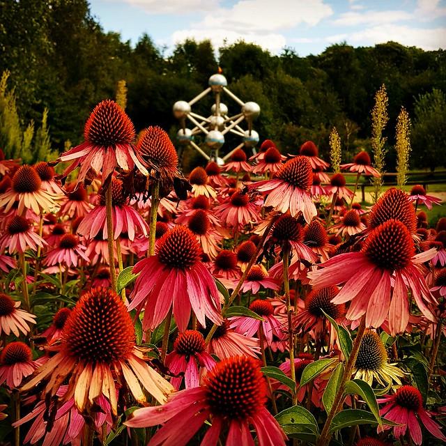 Blumen vorm Atomium