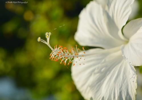 #flower #amazing #nice #nikon #click #photohraphy #photo #photowork #Photographer #hobby #Bangladesh  #joba
