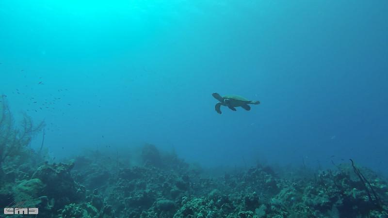 Cayman2017_0362