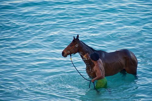 bridgetown barbados male man horse ocean water swim ritual garrisonsavannah carlislebay blue horseflesh beauty travel people