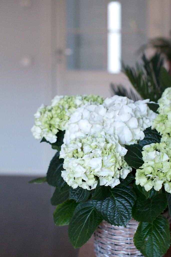 kukkia05