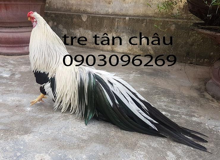 36436065362_926b30d955_o.jpg