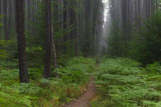 Trail into the smoke