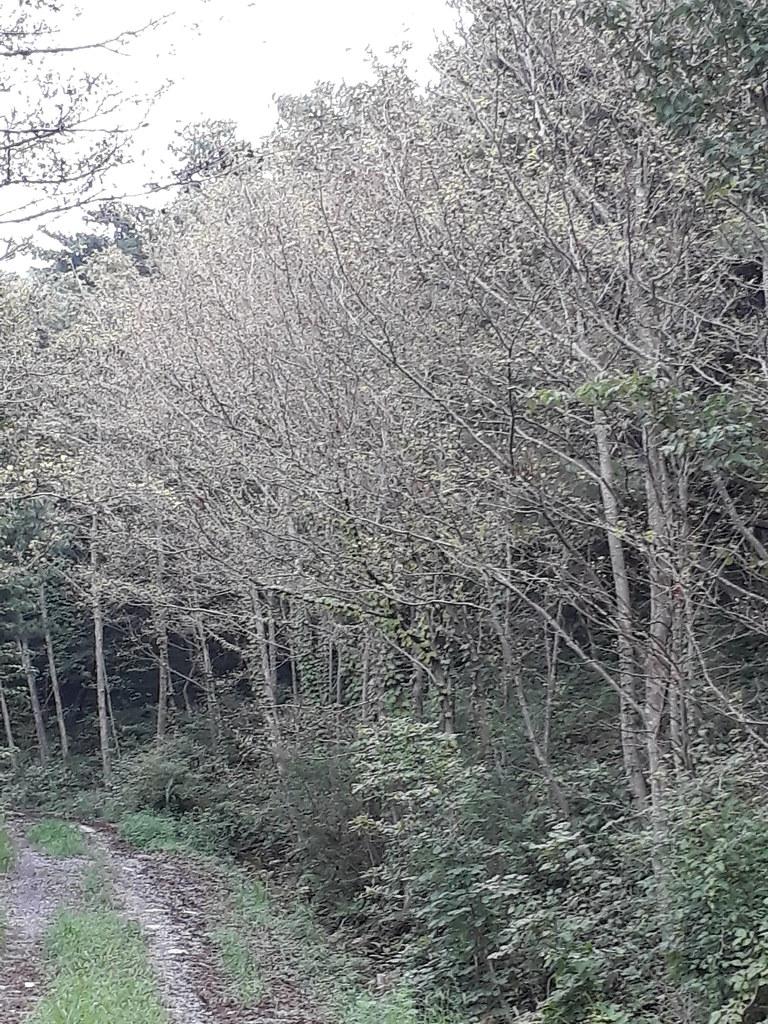 16-4 7월 물오리나무숲