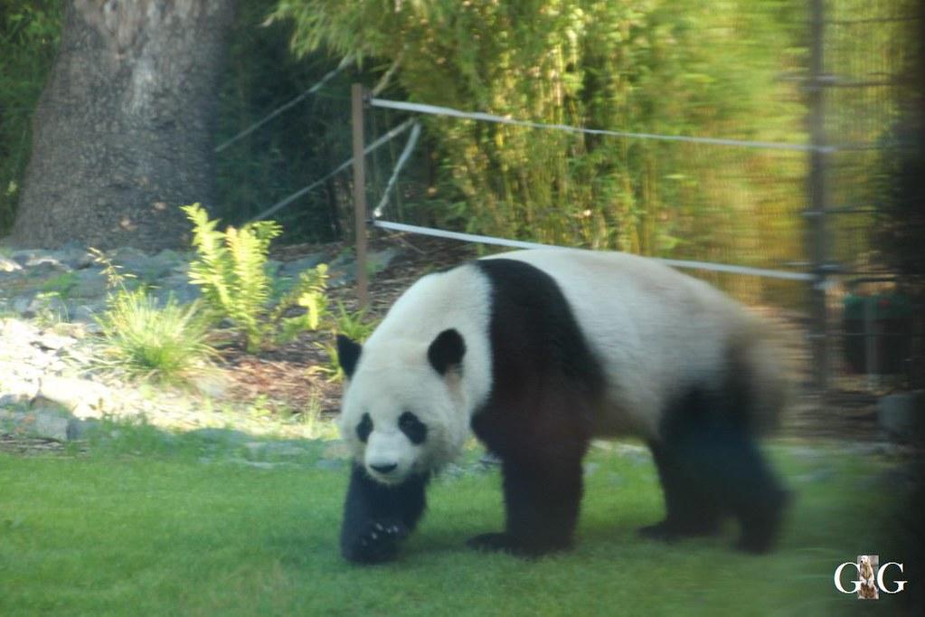 Besuch Zoo Berlin 20.08.201724
