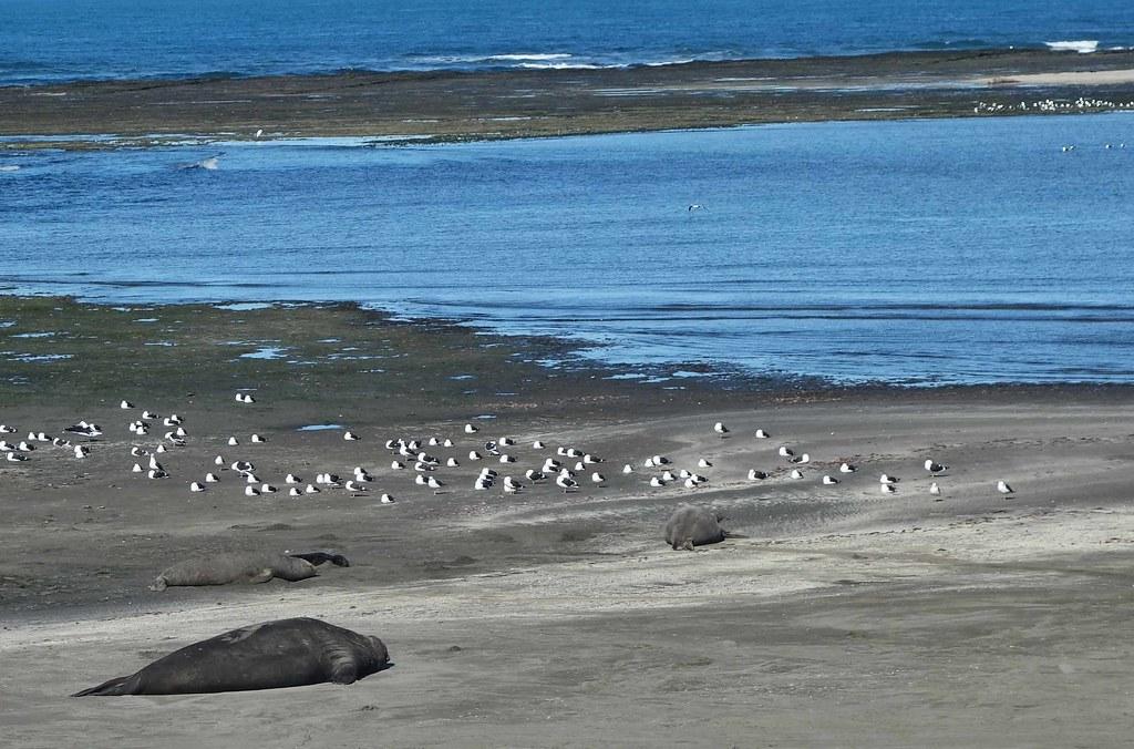 Puerto Piramides - Punta Delgada - Elephant de Mer 1