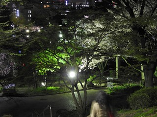 千葉公園綿打池 夜桜ライトアップ02
